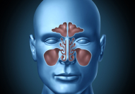 Animation of sinus structure